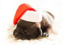Kenton Brothers: Adopt a Pet This Holiday!