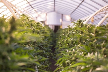 Medical Marijuana in Missouri