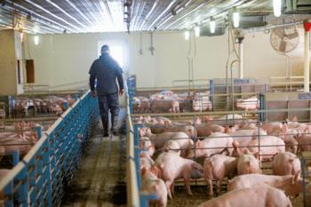 Precision Livestock Farming